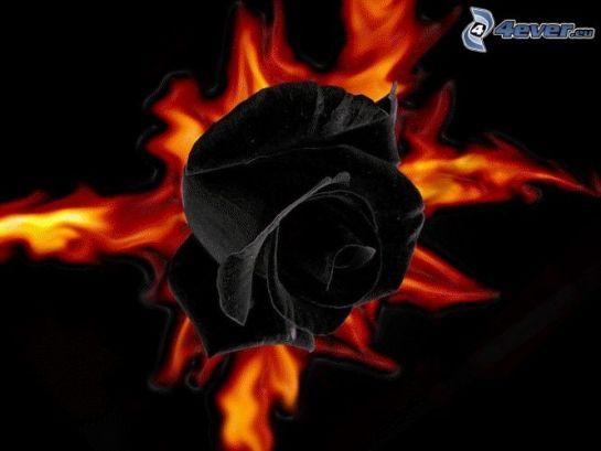 rosa-nera,-fuoco-165757